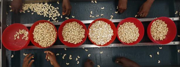 Aberta campanha de comercialização de castanha de caju