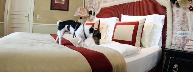 Partilhar cama com animais de estimação afeta o sono
