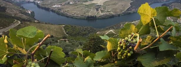 Via Navegável do Douro gerida pela APDL a partir de 1 de junho
