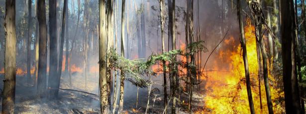 Incêndio consome mato há oito horas