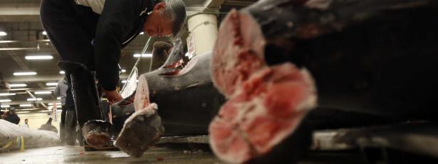 PS propõe atribuição definitiva a Portugal de duas armações de atum no Algarve