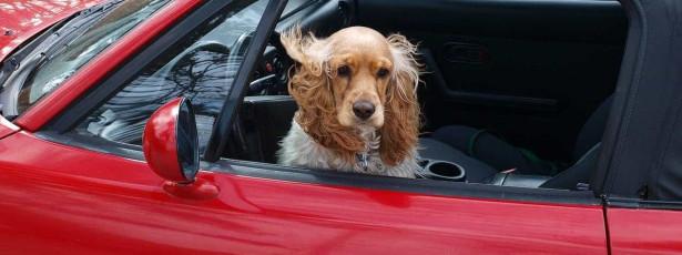 Esquece cão dentro do carro. Polícia dá-lhe o mesmo castigo