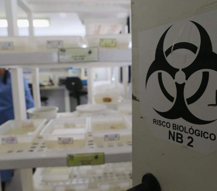 Zika: Fomos o primeiro país europeu com um método de diagnóstico