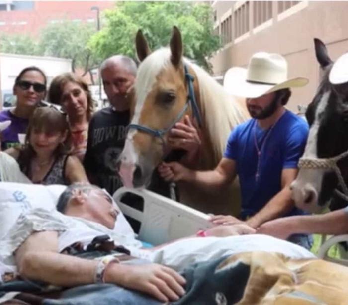 Veterano do Vietname despede-se dos seus cavalos no hospital