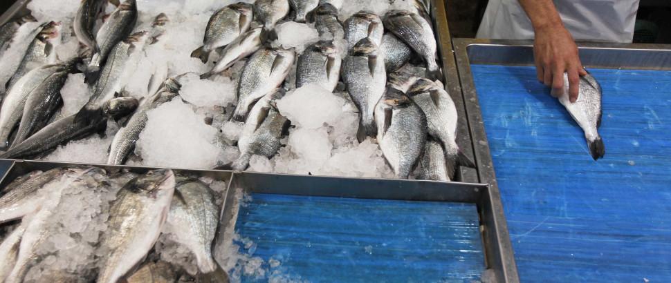 Peixe vendido nas lotas portuguesas em 2013 no nível mais baixo
