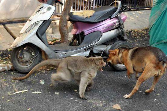 Macaco e cão protagonizam amizade improvável