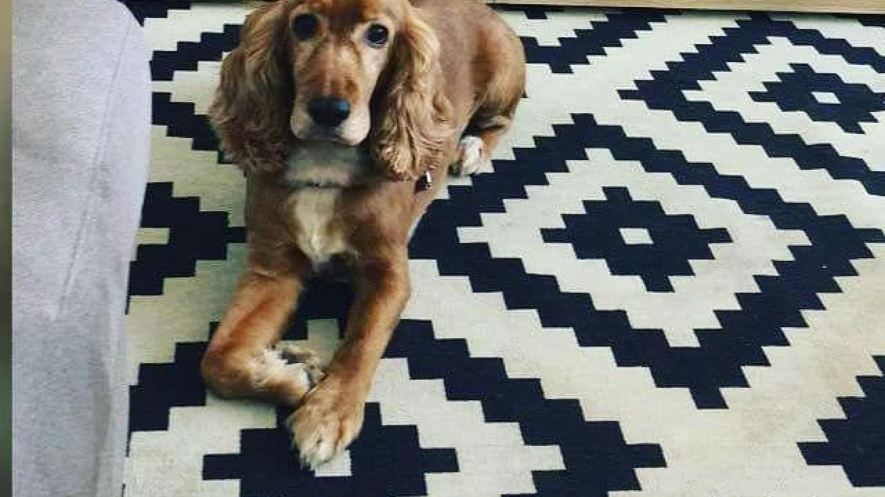 Cadela morre a bordo de um voo de sete horas da TAP