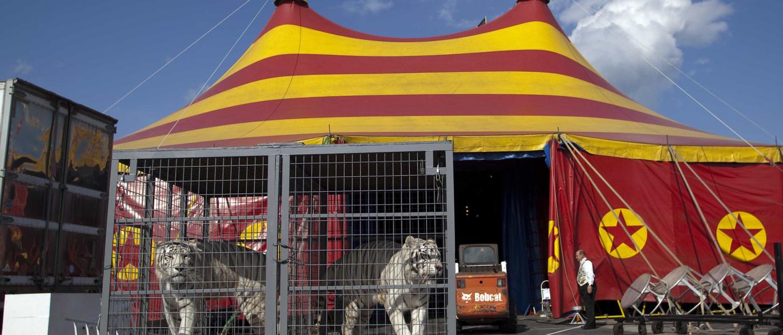 Resultado de imagem para circos com animais