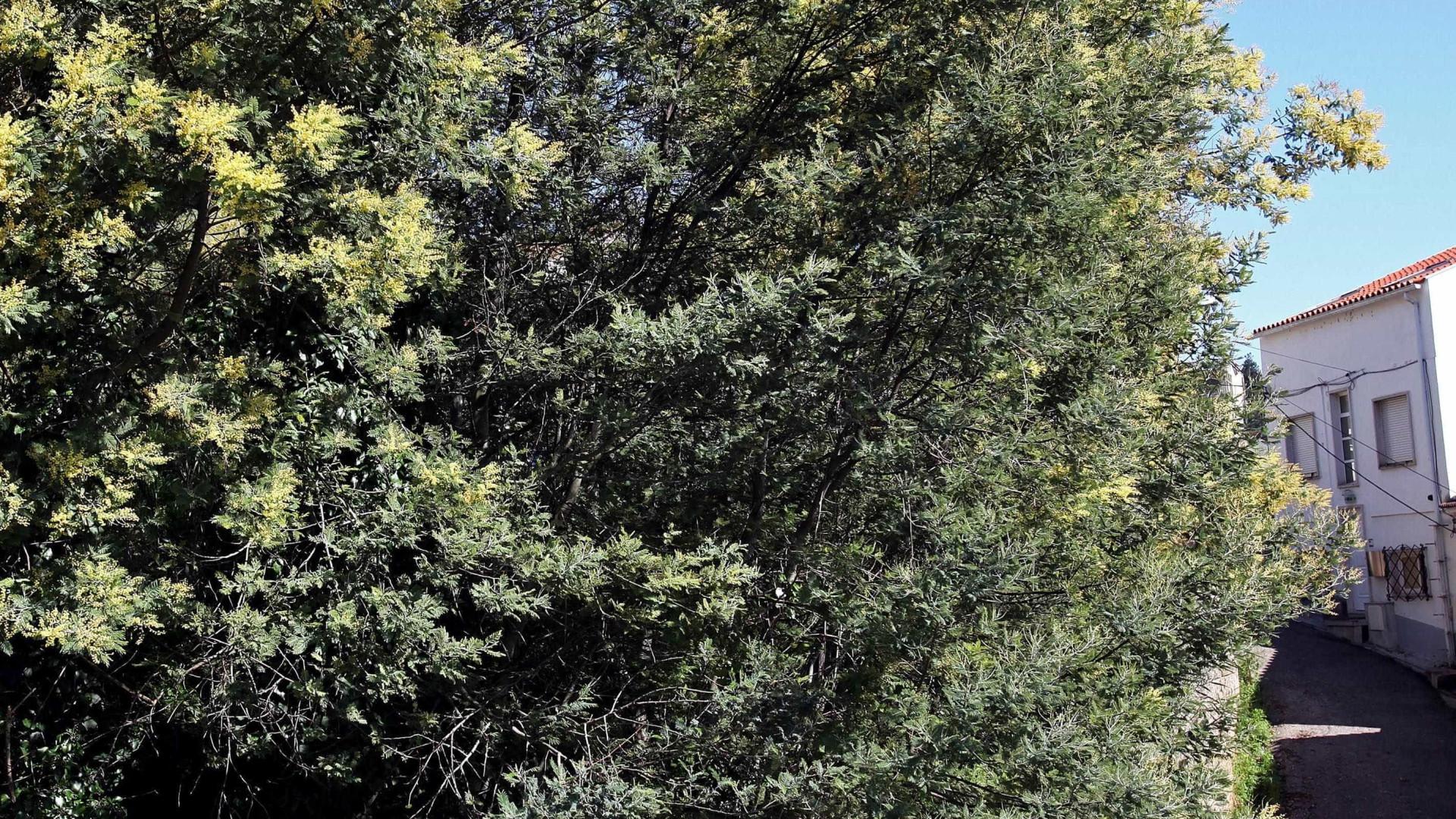 Quercus alerta para perigo das espécies invasoras