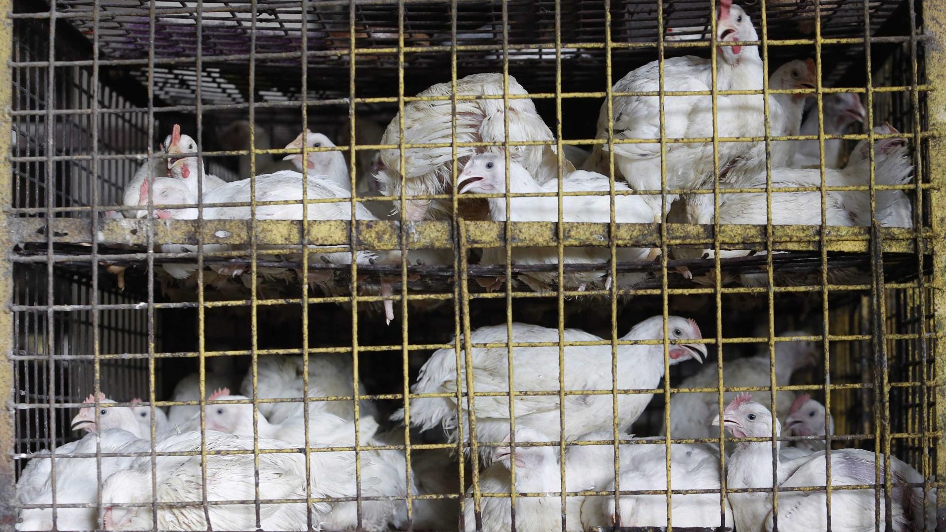 Risultati immagini per polli gabbia