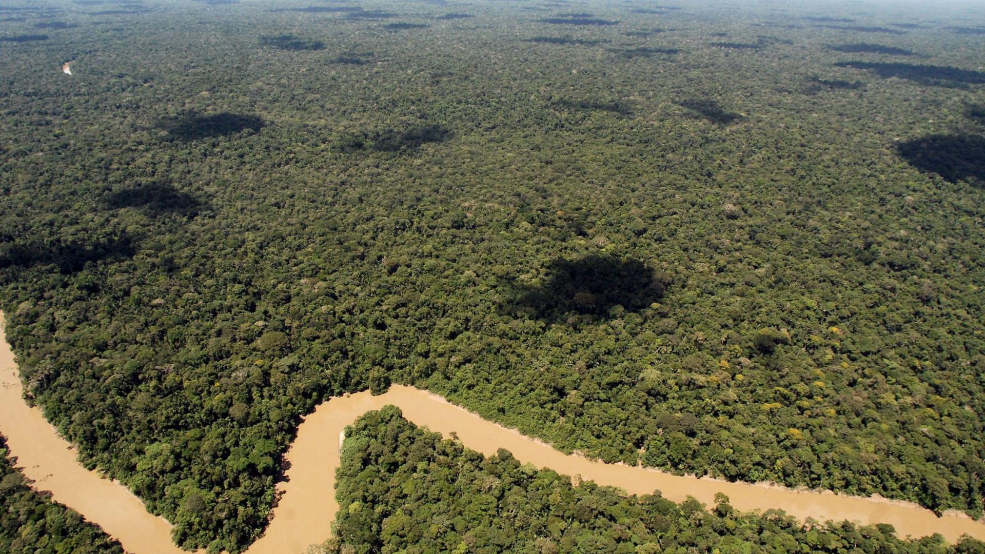 Temer veta lei que diminuiria área de preservação na Amazónia