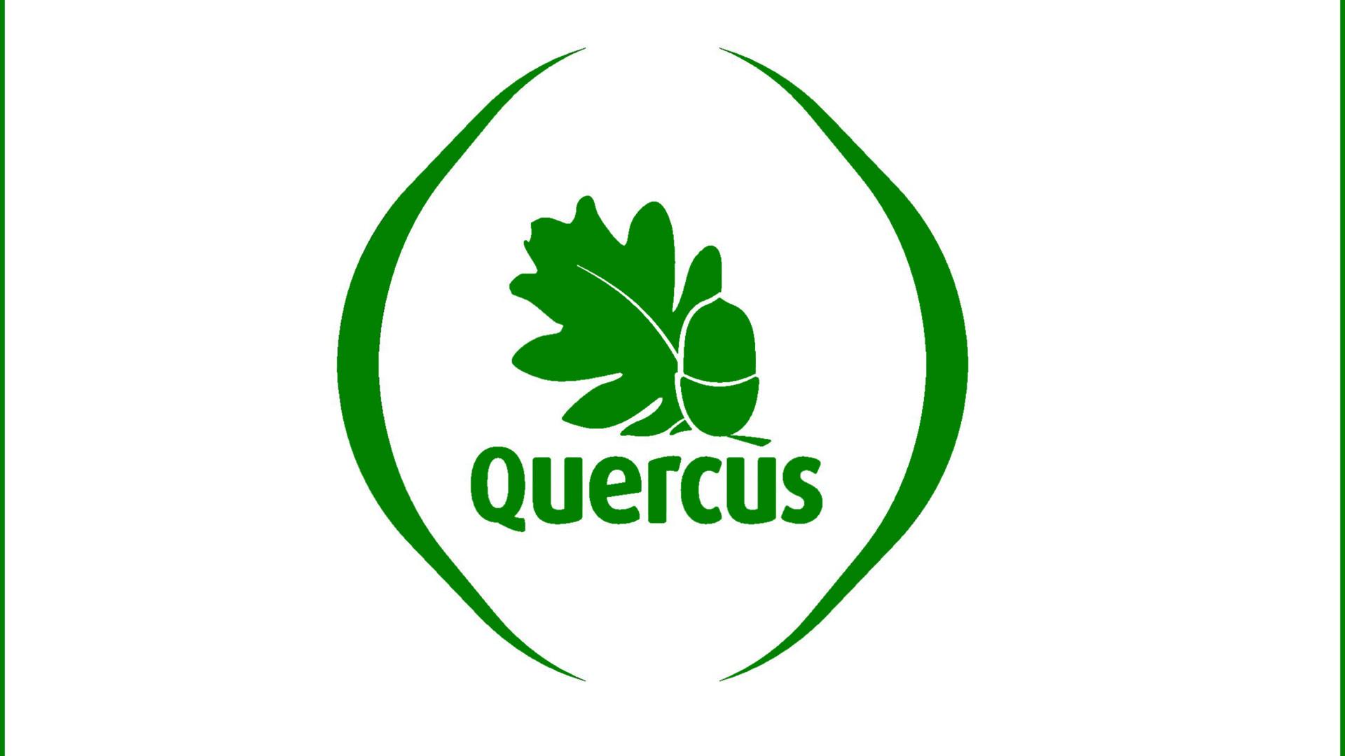 """Quercus lamenta """"total laxismo"""" das autoridades em política florestal"""