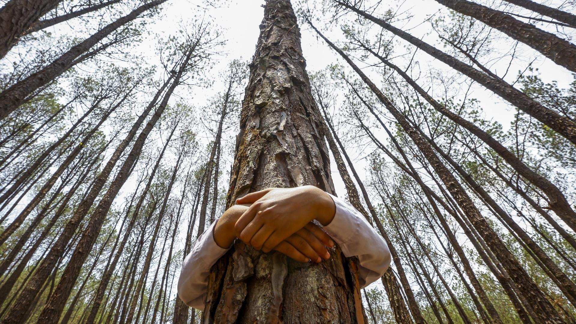 Fundo Ambiental dará 4,5 milhões para projetos de sequestro de carbono