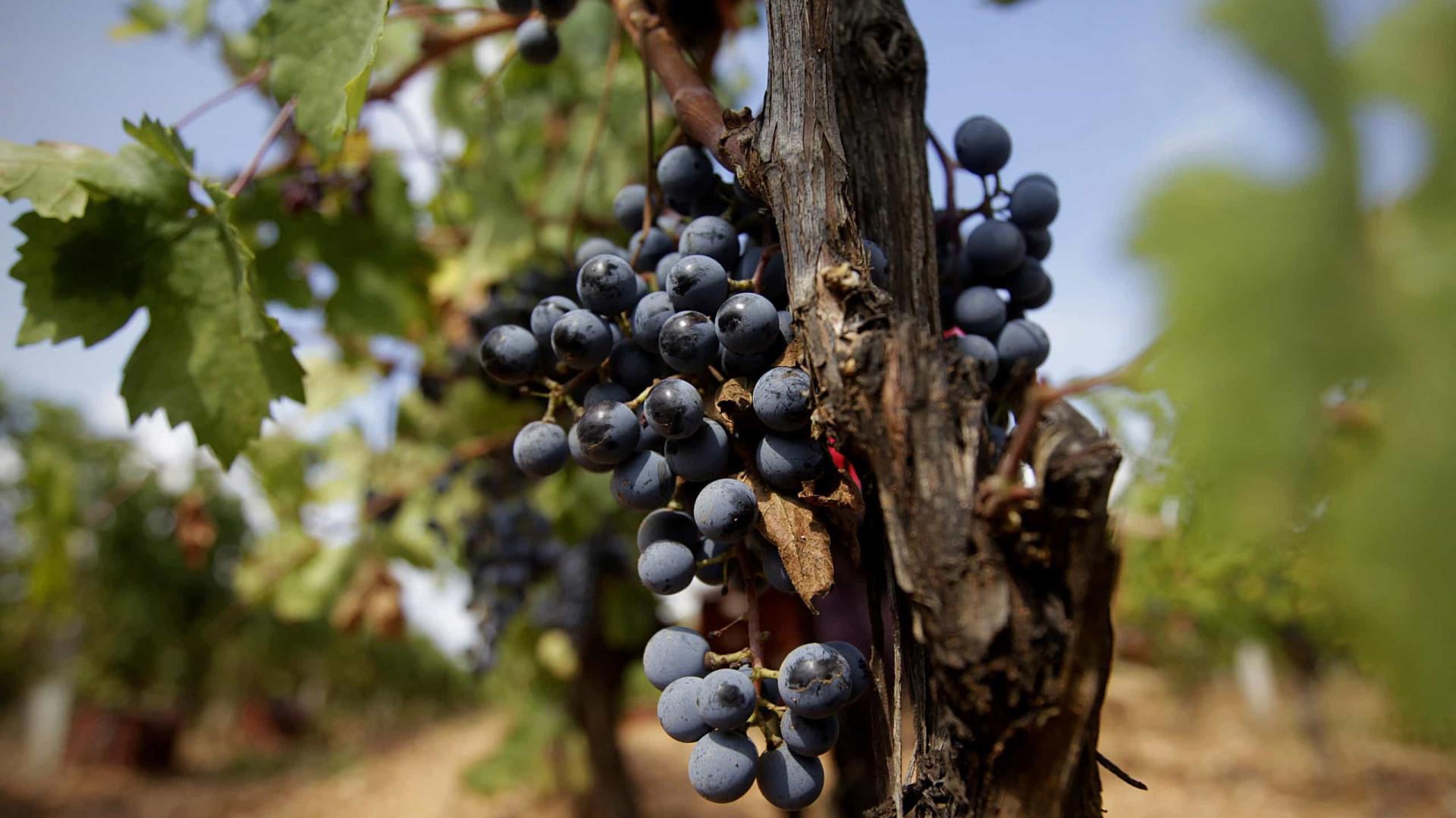 Aprovado acordo entre UE e Singapura que protege vinho português