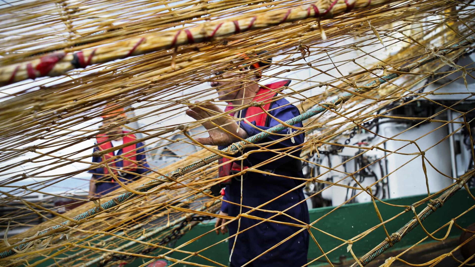 Governo mantém proibição de captura de raia entre maio e julho