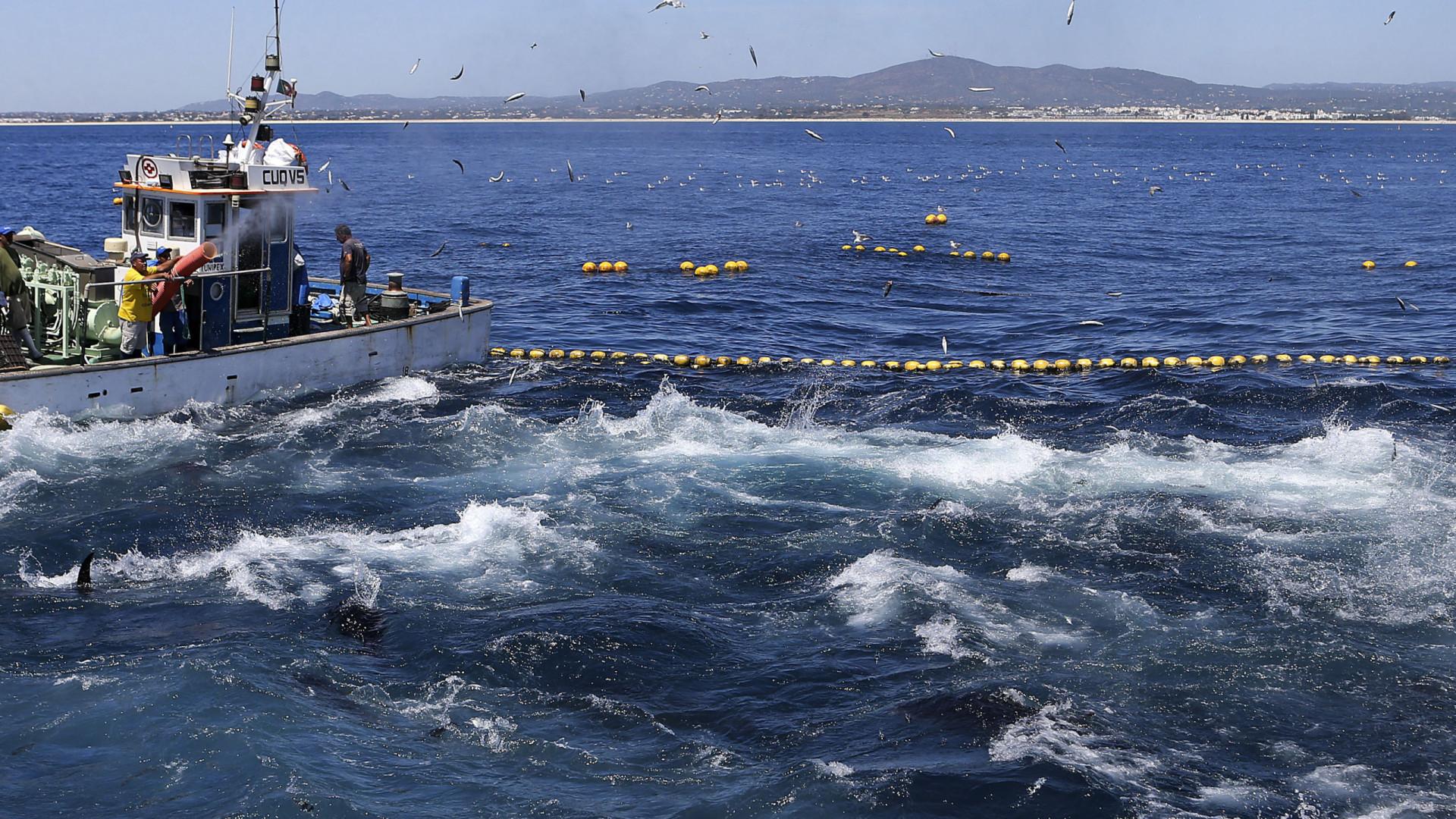 Portugal recebe menos 14 milhões para pescas no próximo orçamento