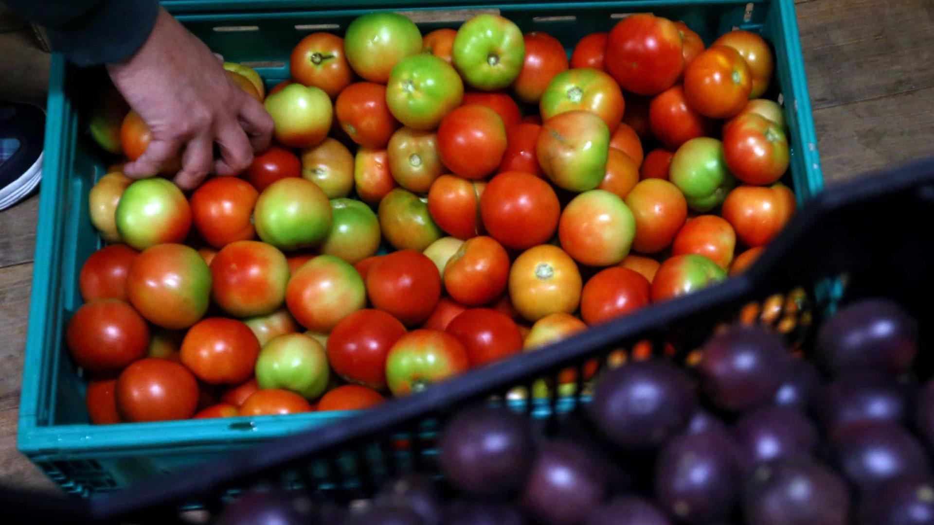 Cidadão da Eritreia quer produzir 2.400 toneladas de legumes em Angola