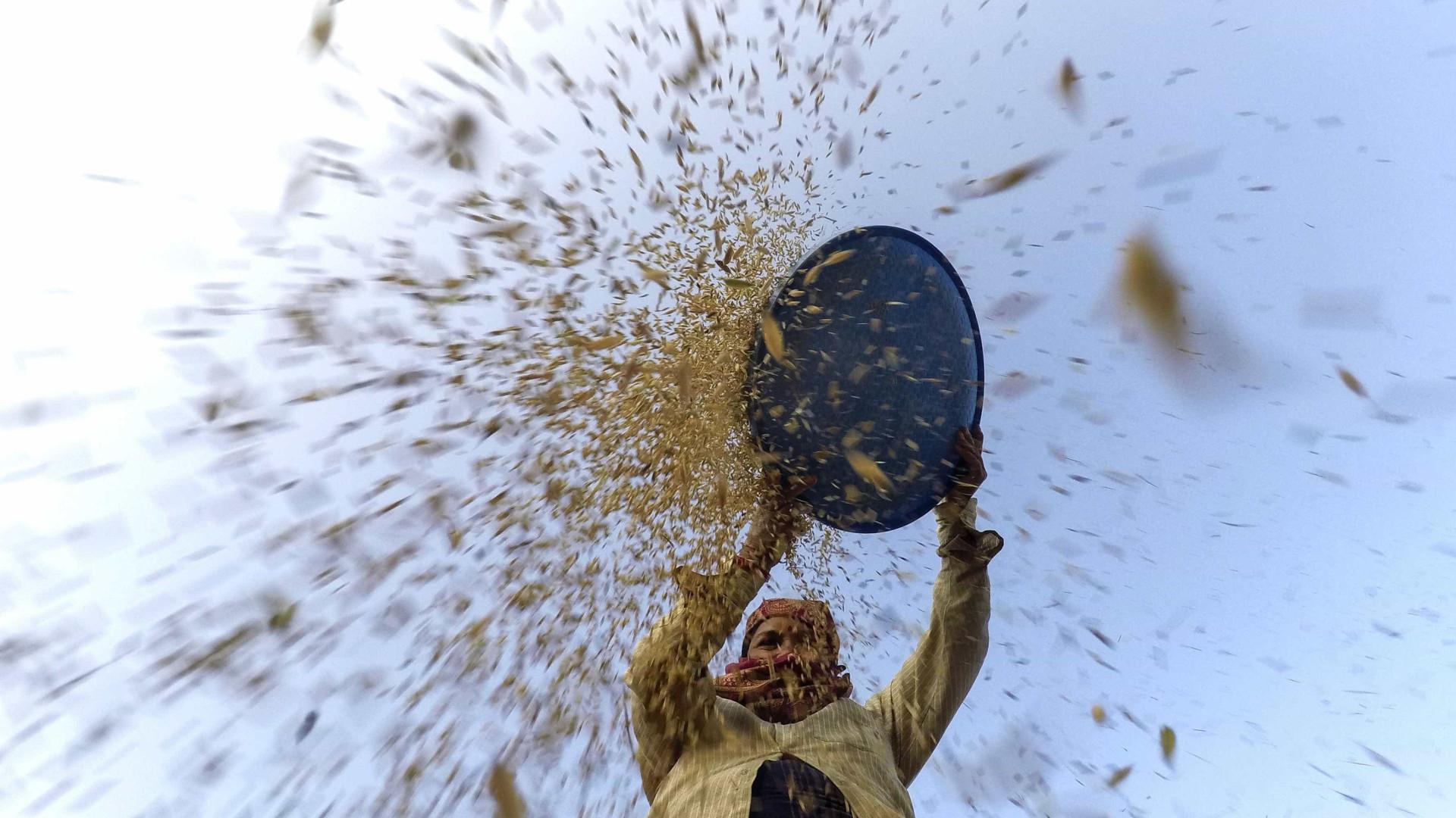 Governo chinês doa dez mil toneladas de arroz a Moçambique