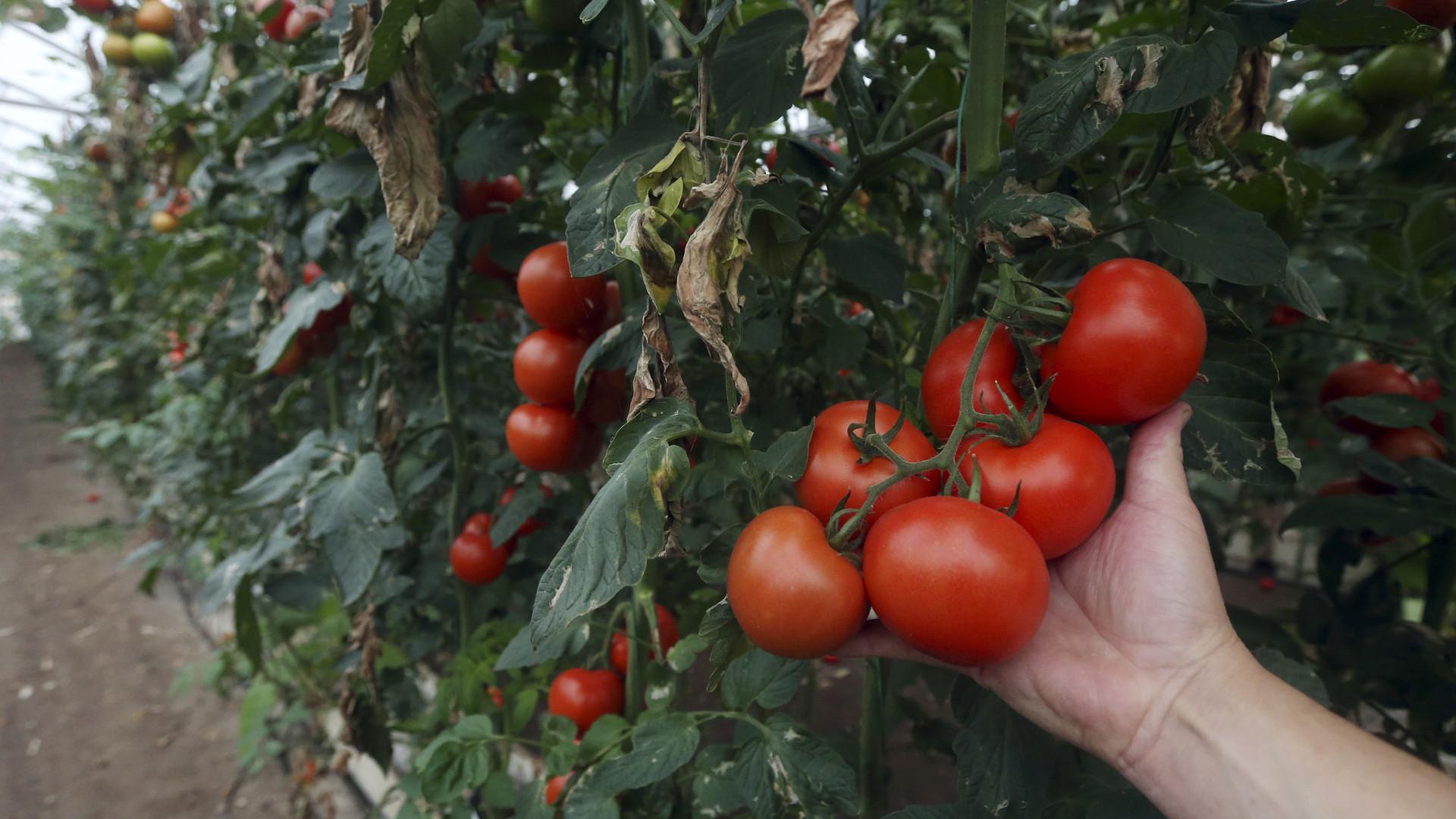 UE e Brasil propõem limites nas ajudas às exportações agrícolas