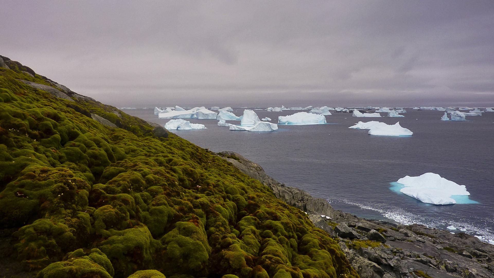 Antártida está tornar-se verde devido a alterações climáticas