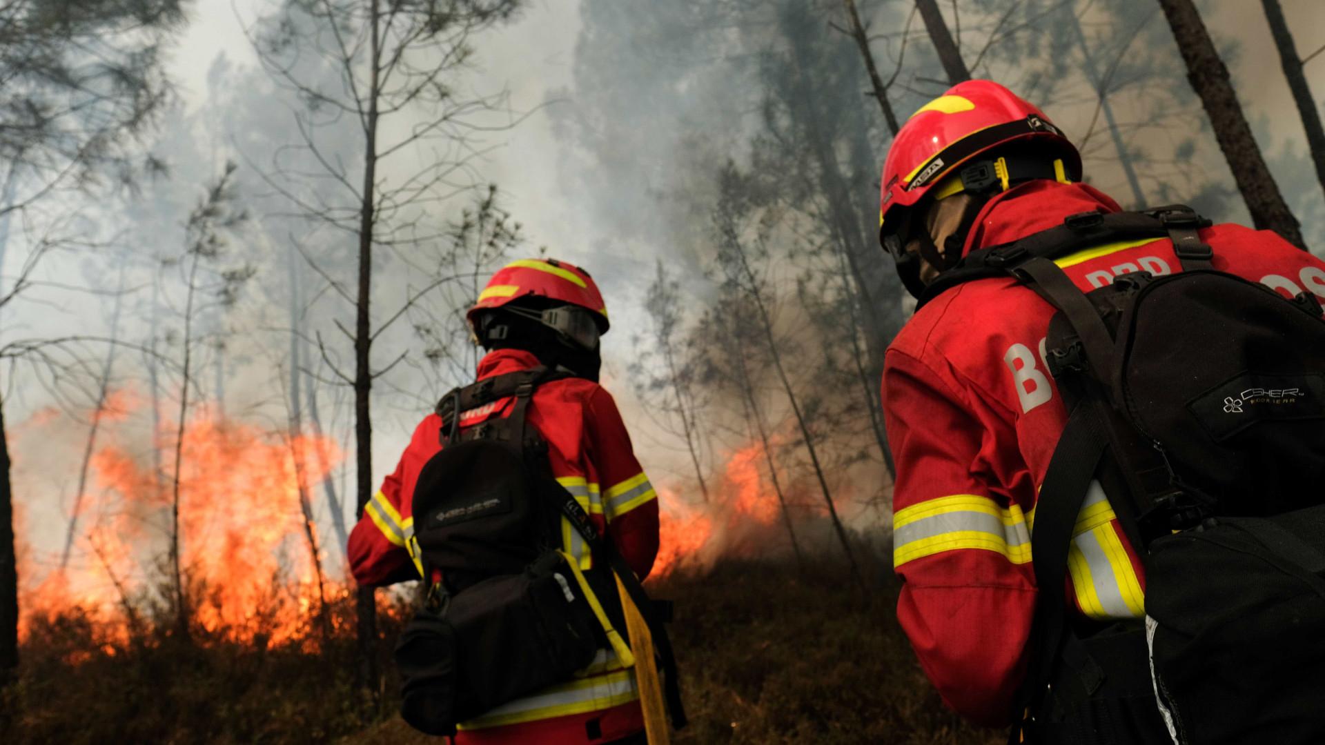Incêndio em eucaliptal e mato nas Caldas combatido por 123 operacionais