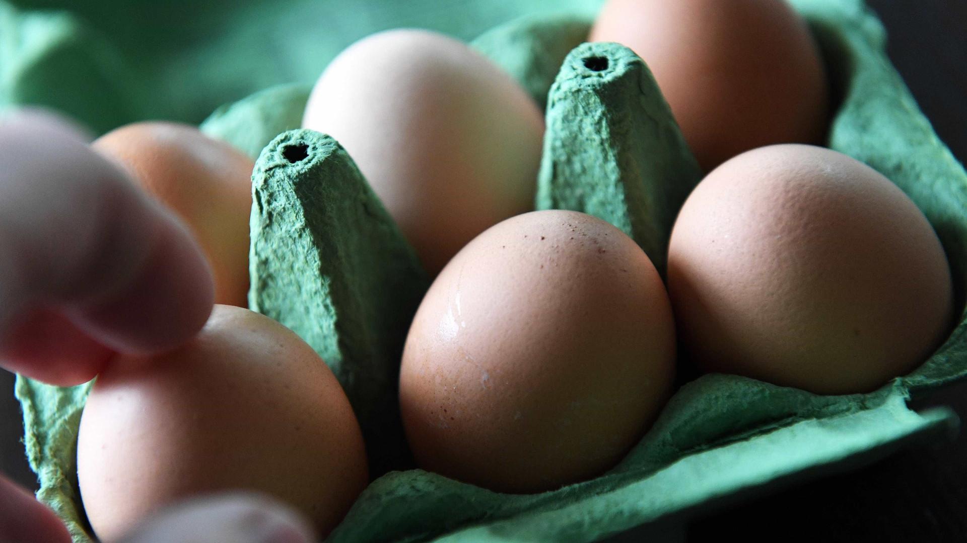 Doze países afetados com ovos contaminados com Fipronil