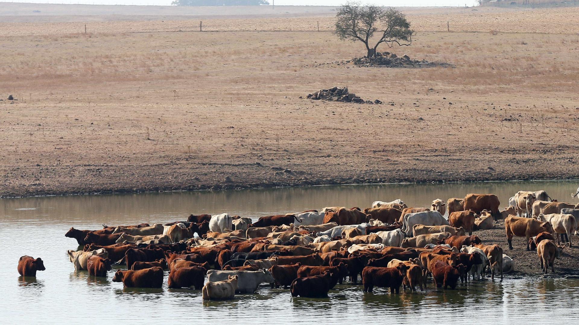 Seca: Ministério da Agricultura avança com apoio à alimentação animal