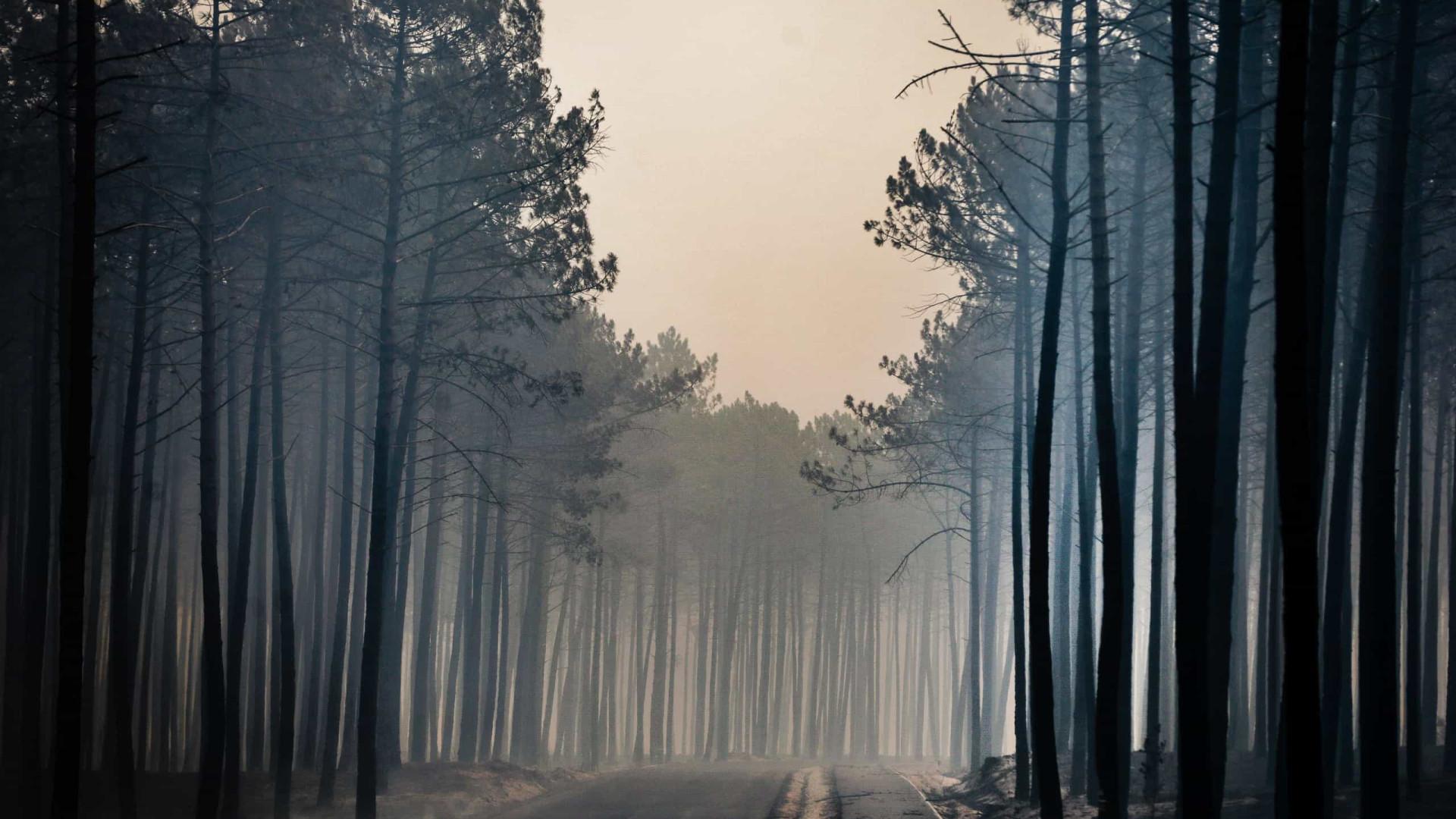 """Aposta na prevenção dos incêndios """"não é politicamente atrativa"""""""