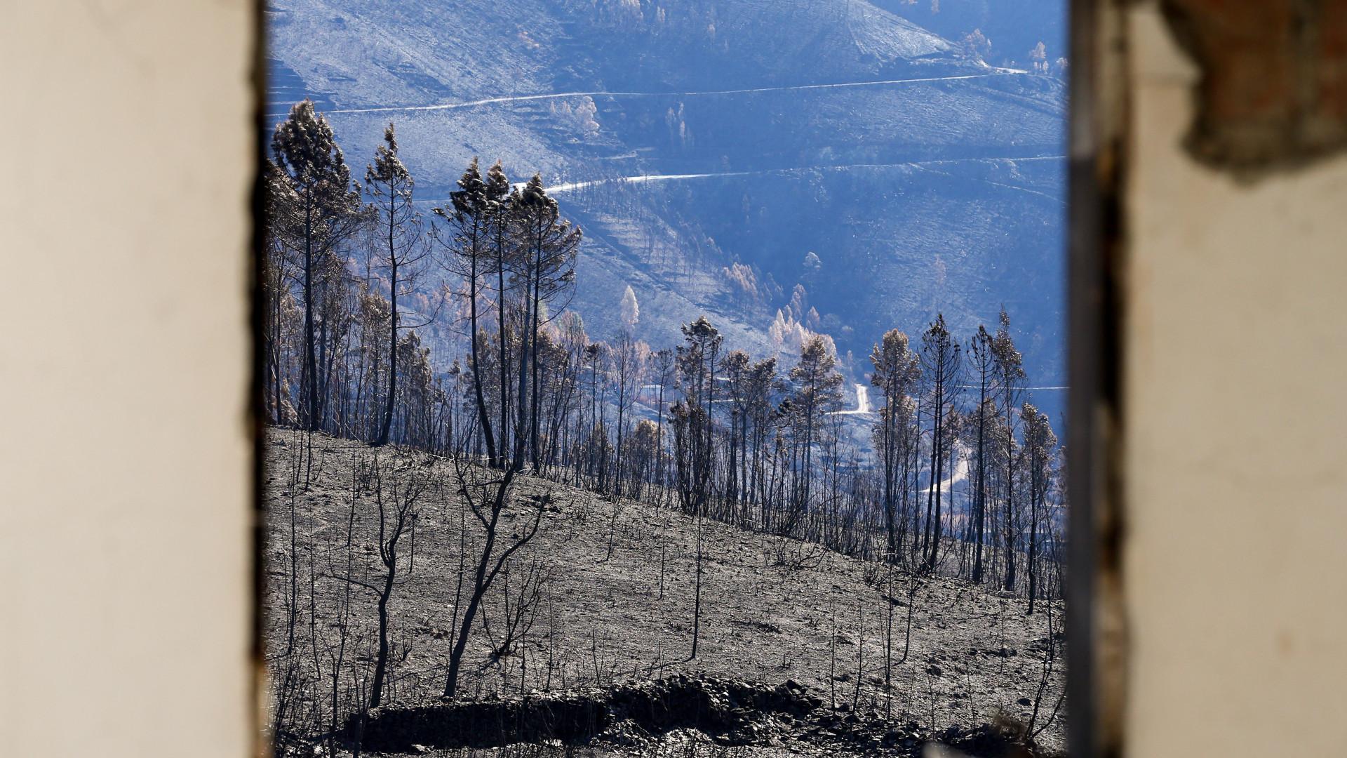 Grupo coordena intervenções em zonas de fogos para evitar erosão do solo