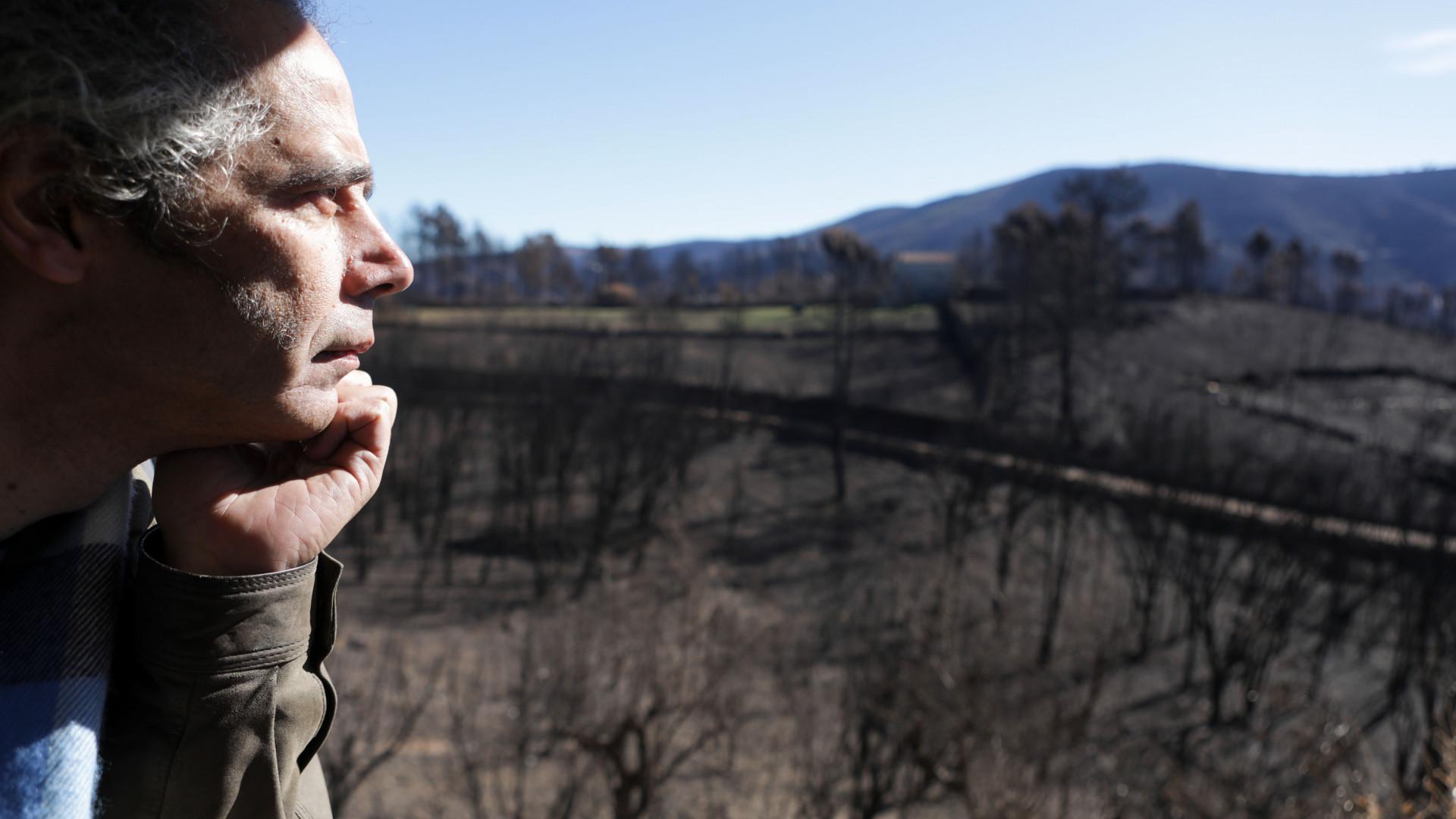 Pampilhosa da Serra perdeu 80% da floresta. 500 habitações foram afetadas