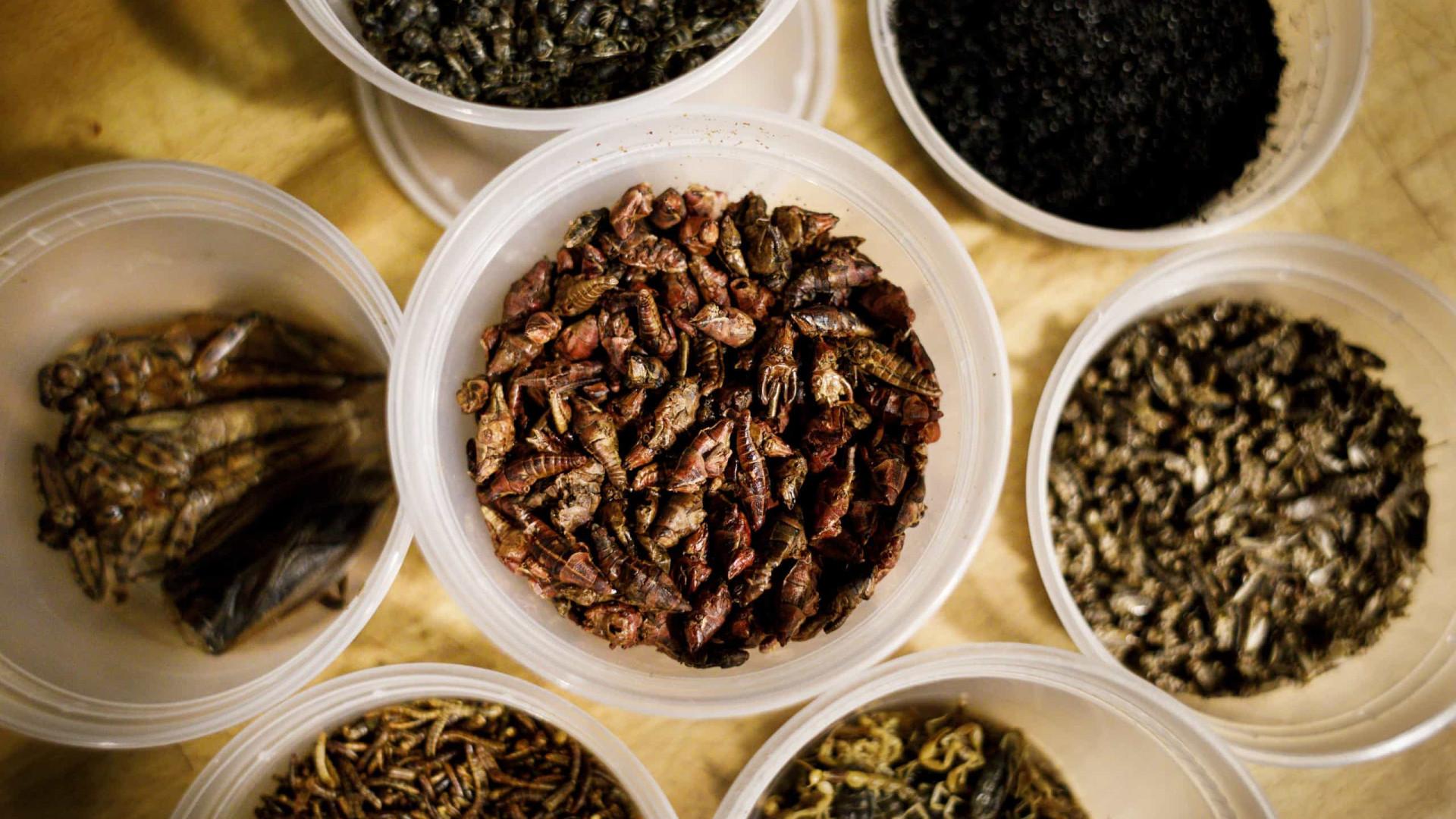 Carne de laboratório ou insetos são alternativas à proteína animal