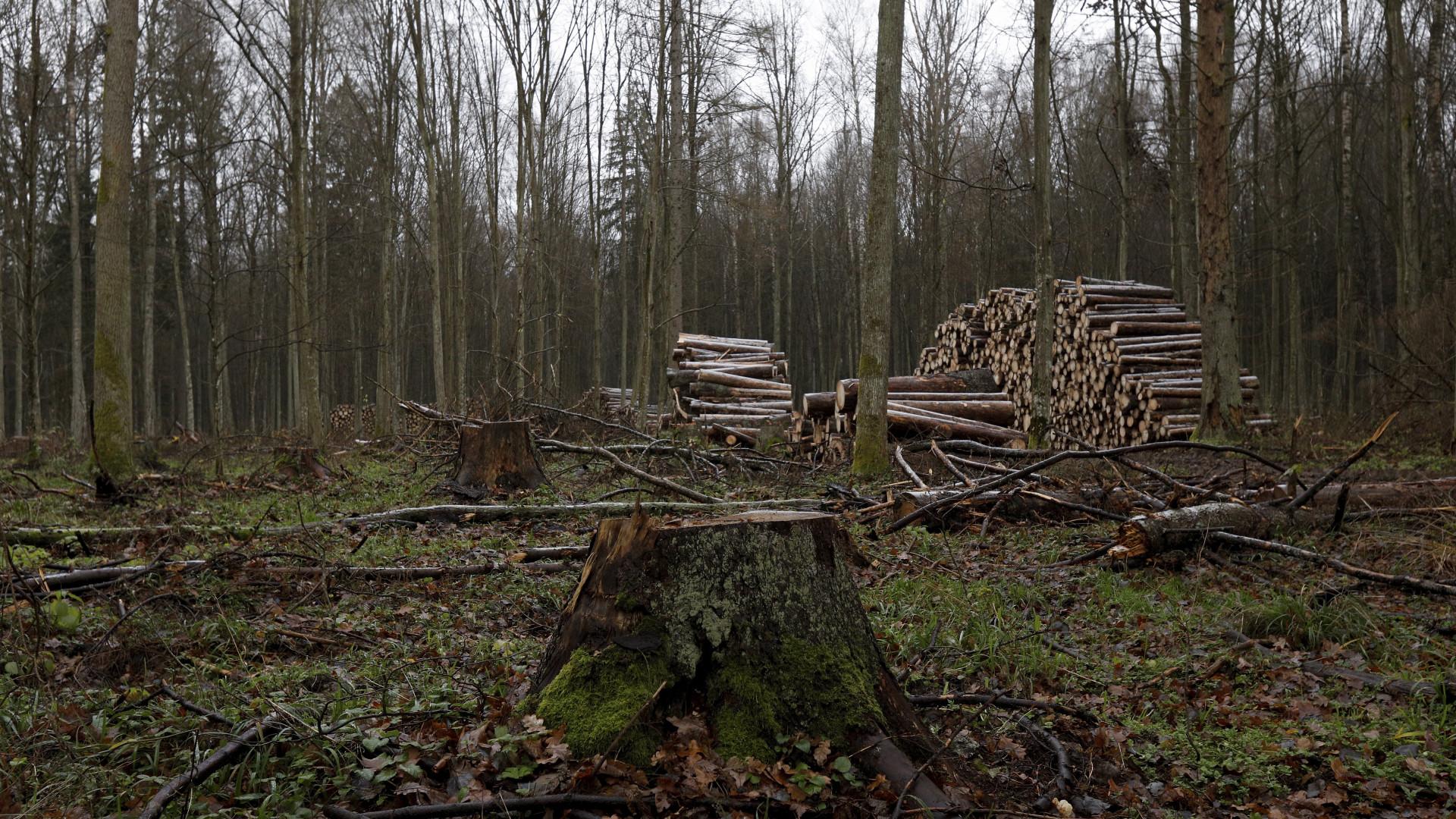 Tribunal Europeu condena Polónia por intervenção em floresta milenar