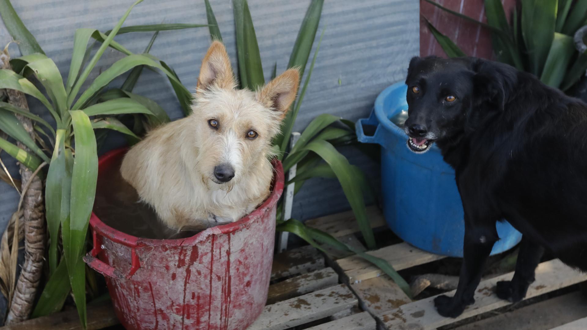 Tobias foi o primeiro, agora Clara tem 88 cães que recolheu das ruas