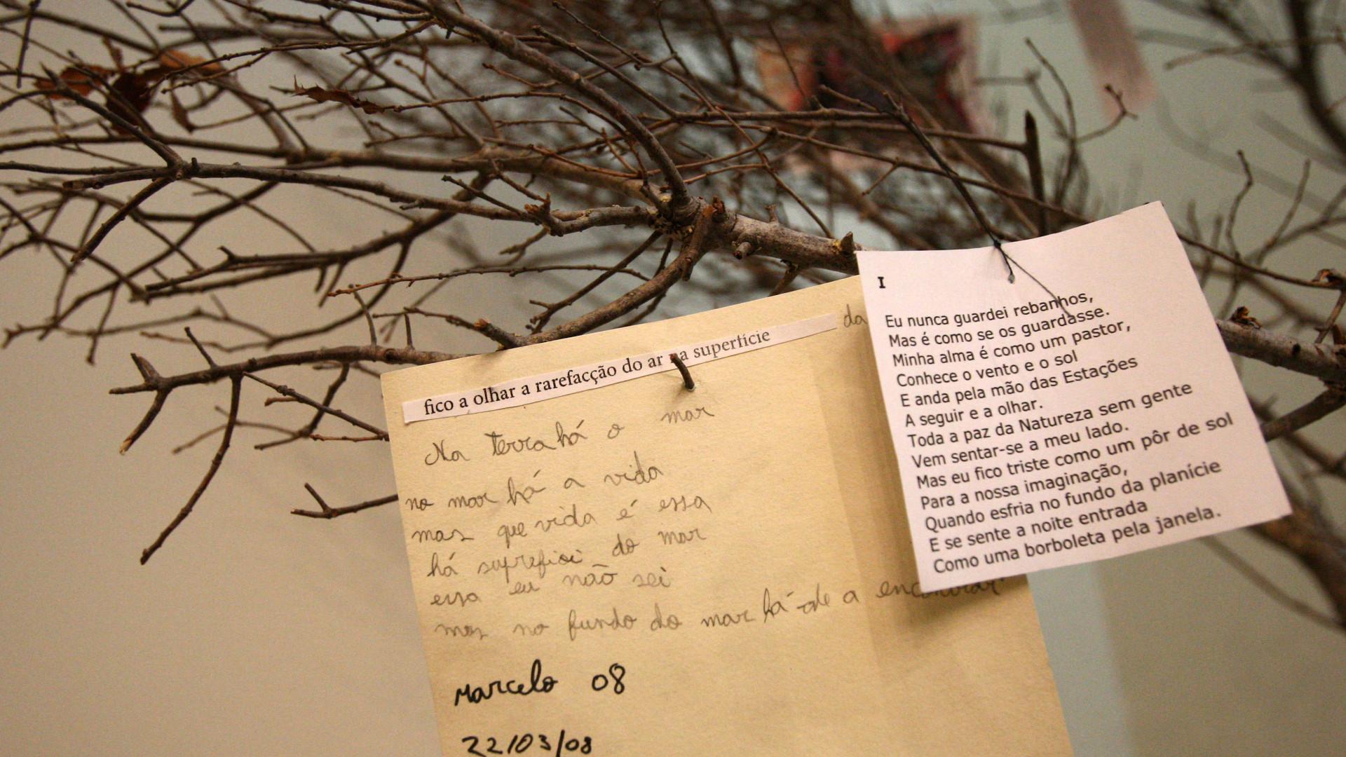 Hoje é Dia da Poesia. Há leituras, conferências, música e exposições