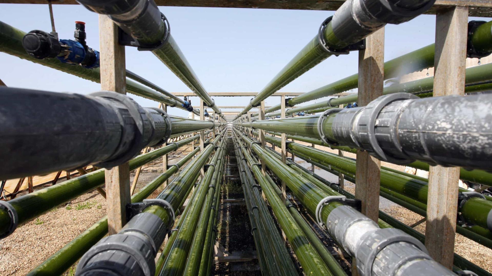 Presidente da República promulga criação de novas centrais de biomassa