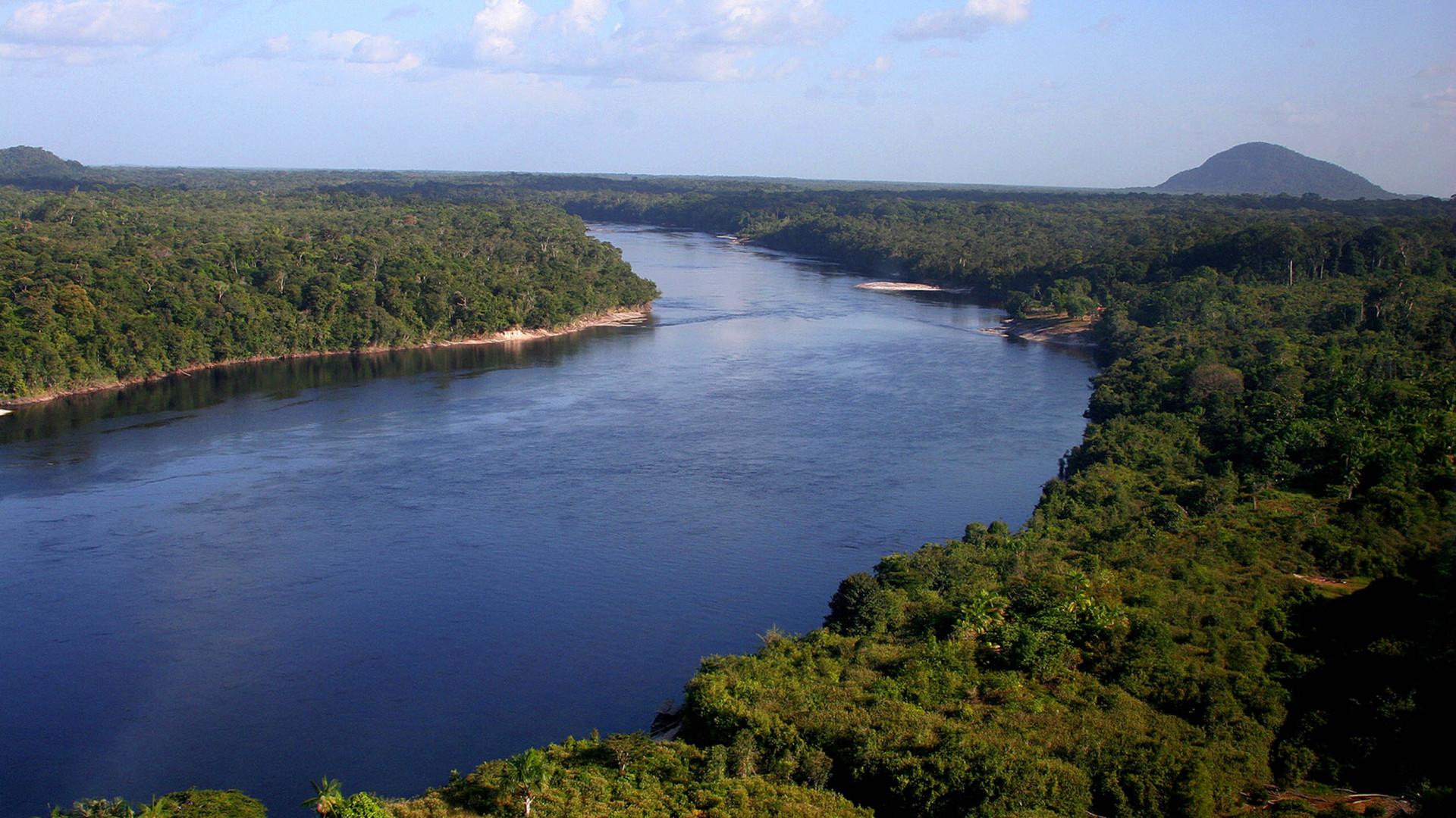 """Floresta da Amazónia aproxima-se perigosamente de ponto de """"não retorno"""""""