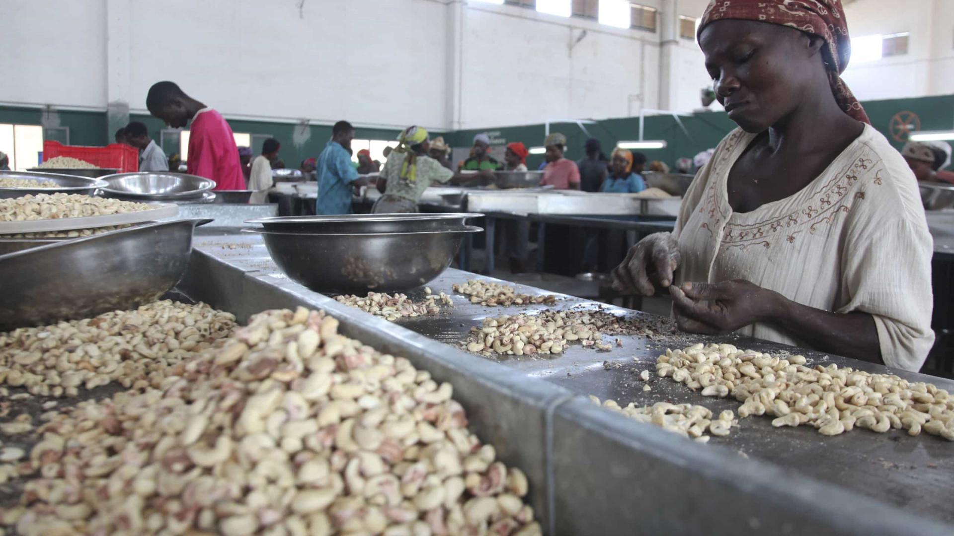 Cultura tradicional do caju não ajuda Guiné-Bissau a desenvolver-se