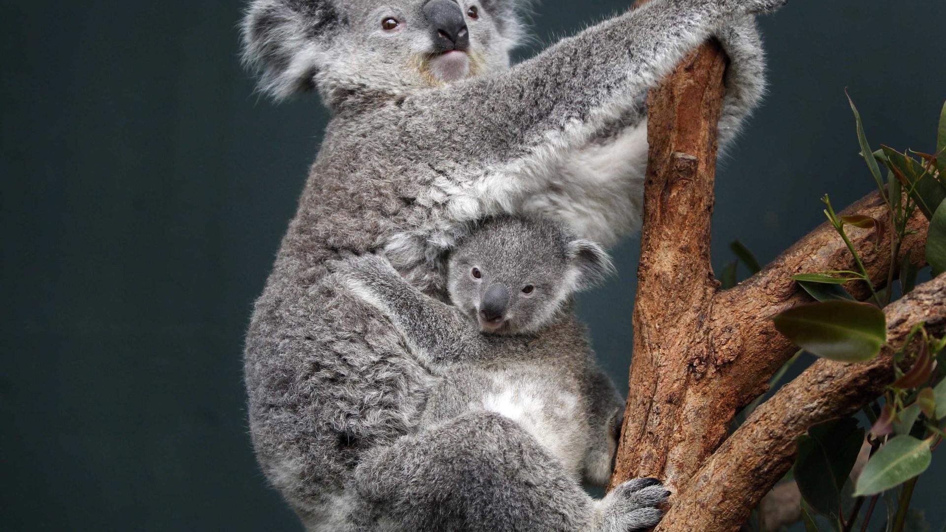 Descoberto antepassado dos mamíiferos que revela origem dos marsupiais