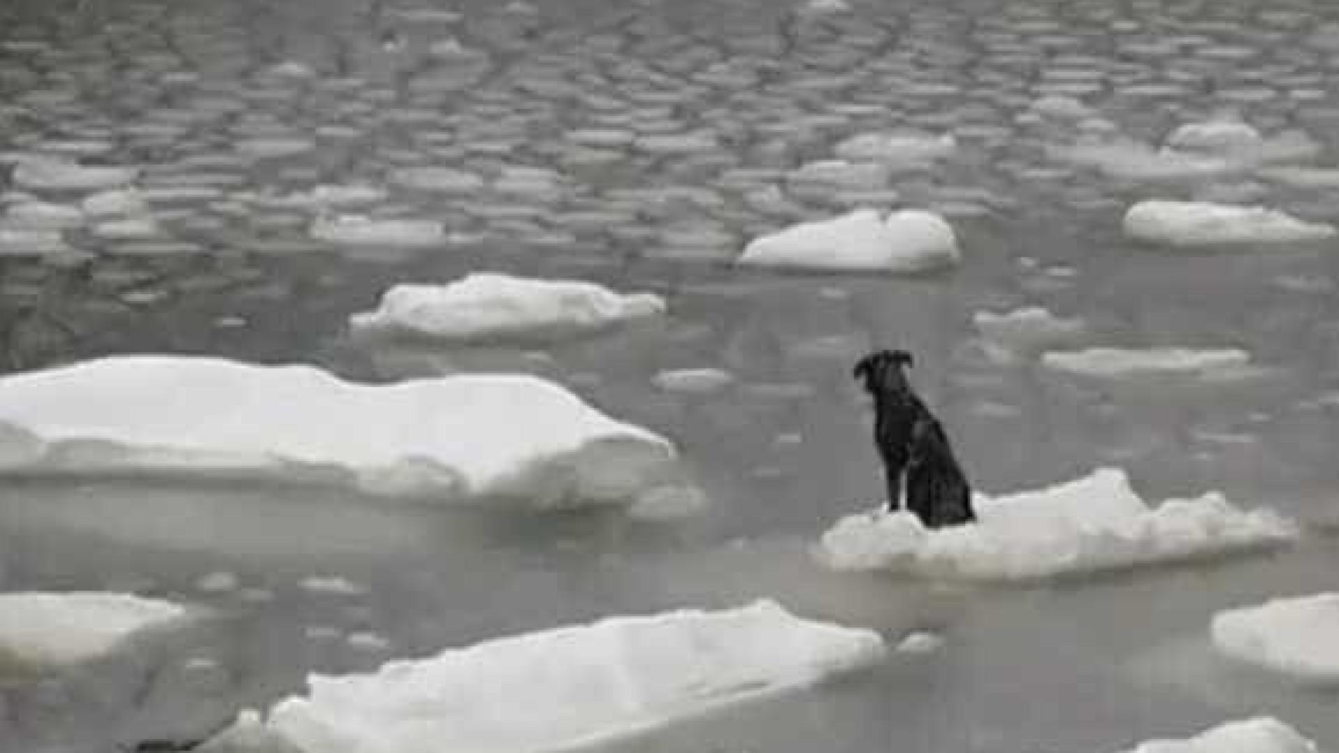 Cão à deriva sobrevive em cima de placa de gelo