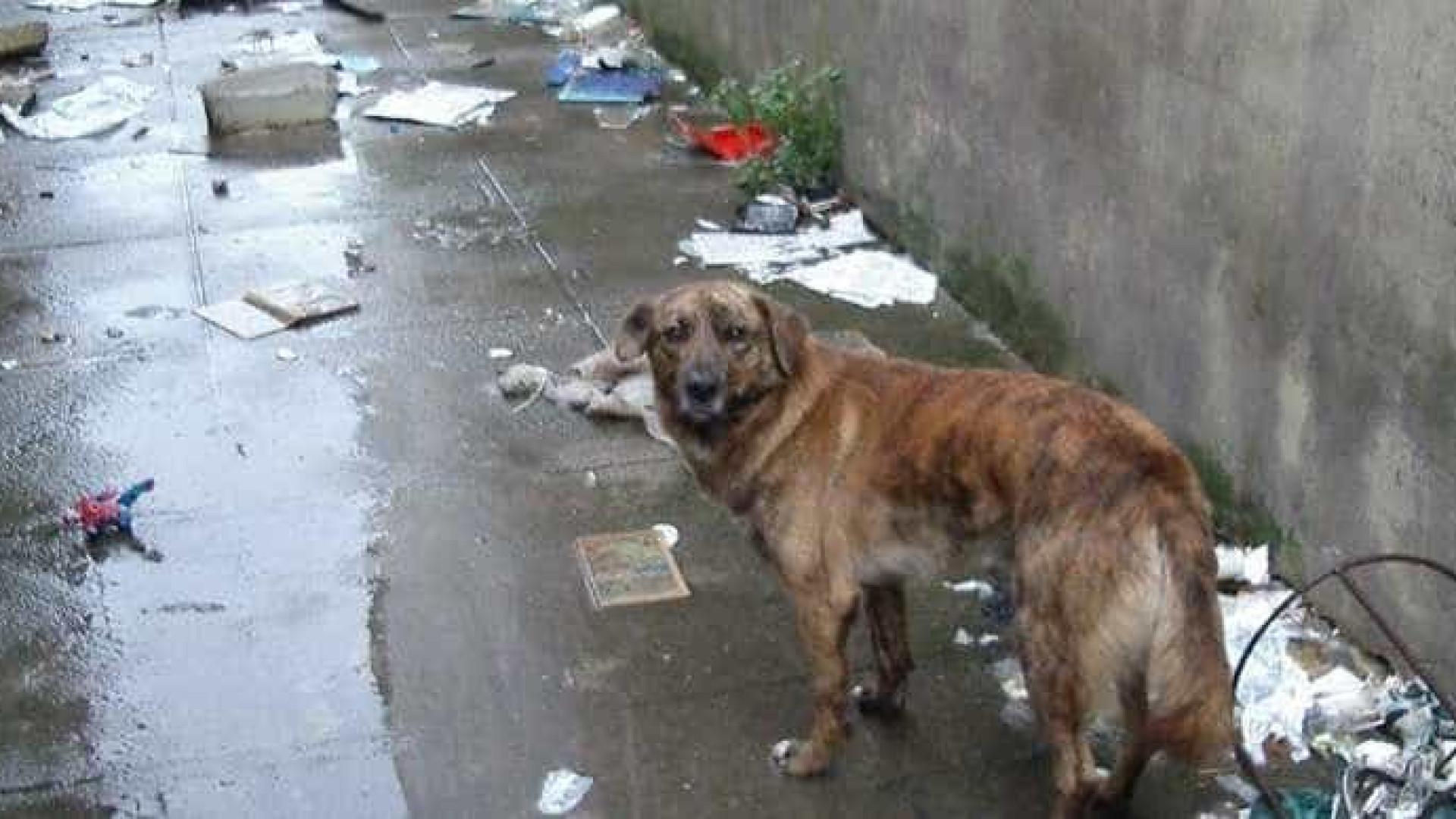 Cão abandonado na própria casa precisa (com urgência) de ajuda