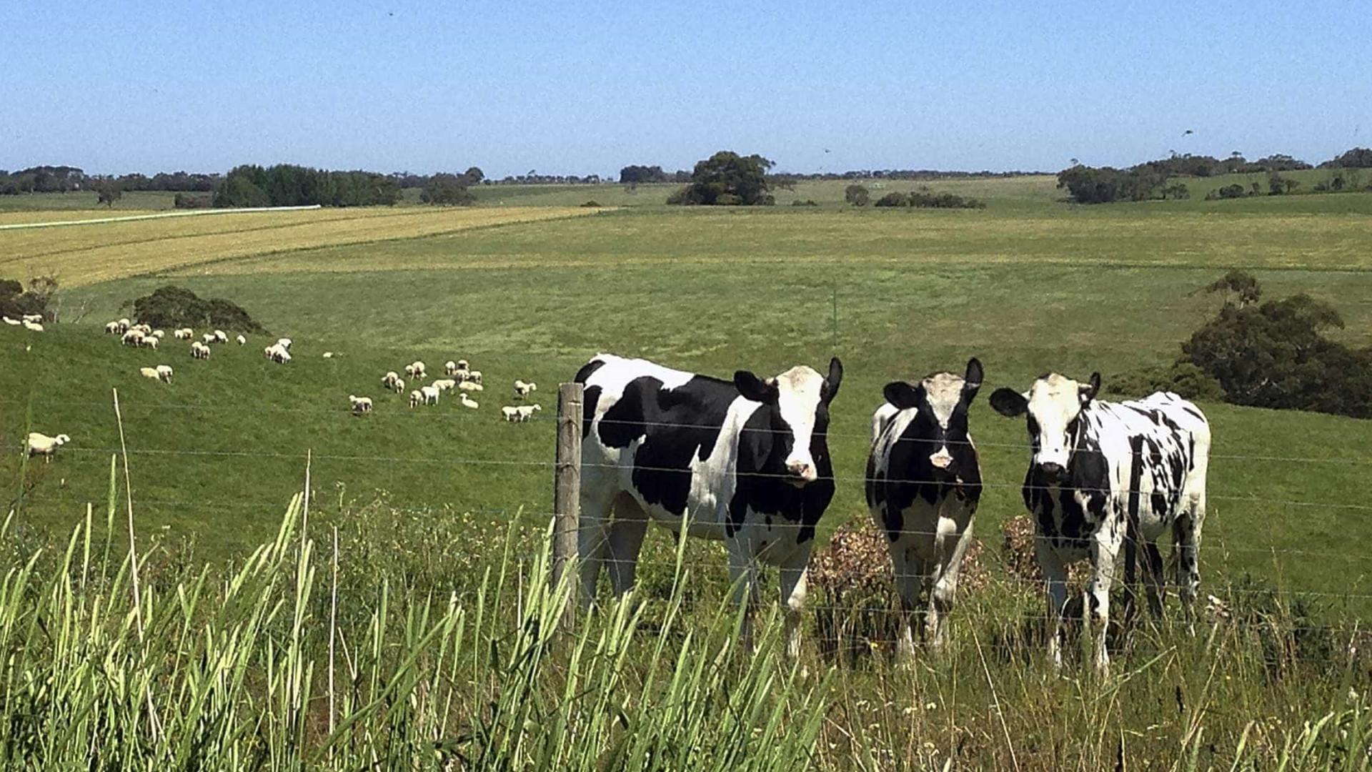 Associações agrícolas da Terceira insatisfeitas com Governo Regional