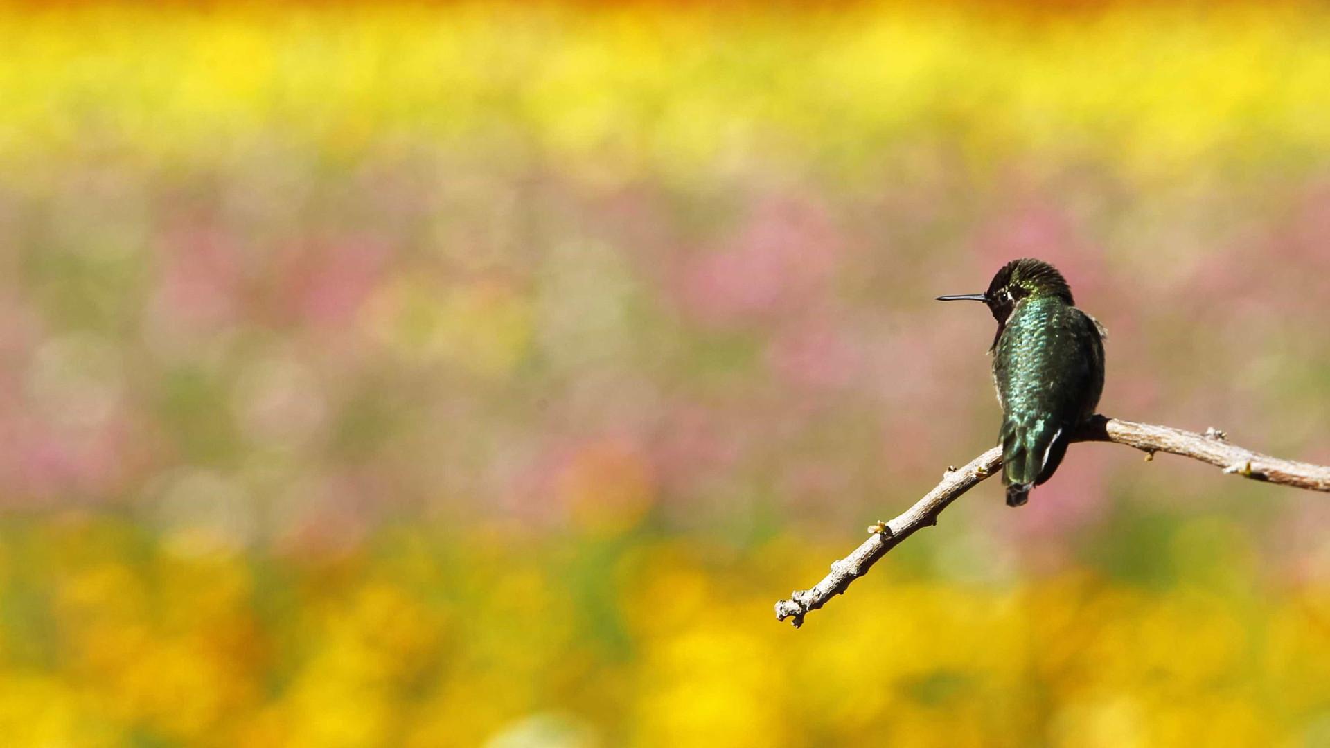 Zoo de Lagos associa-se a campanha contra captura de aves de canto