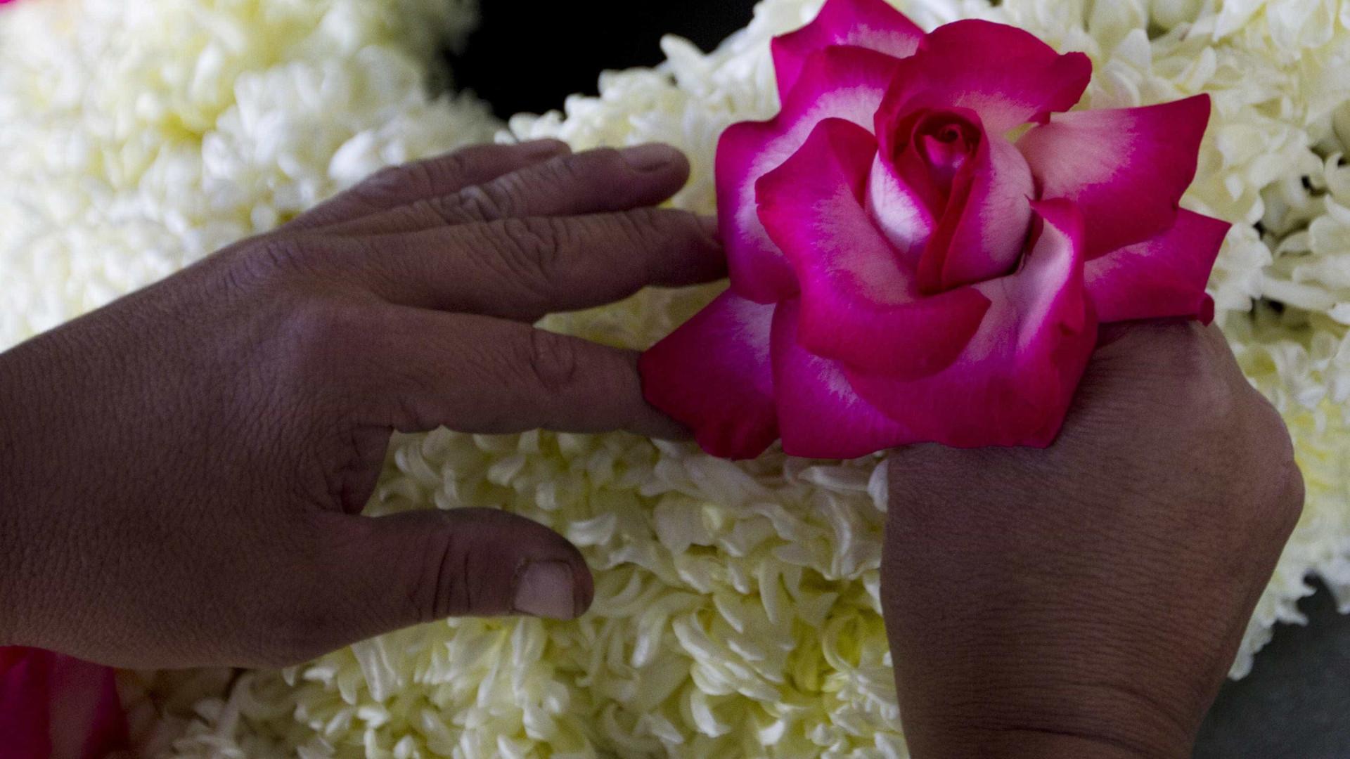 Viana cria roteiro para mostrar arte de colar milhares de pétalas