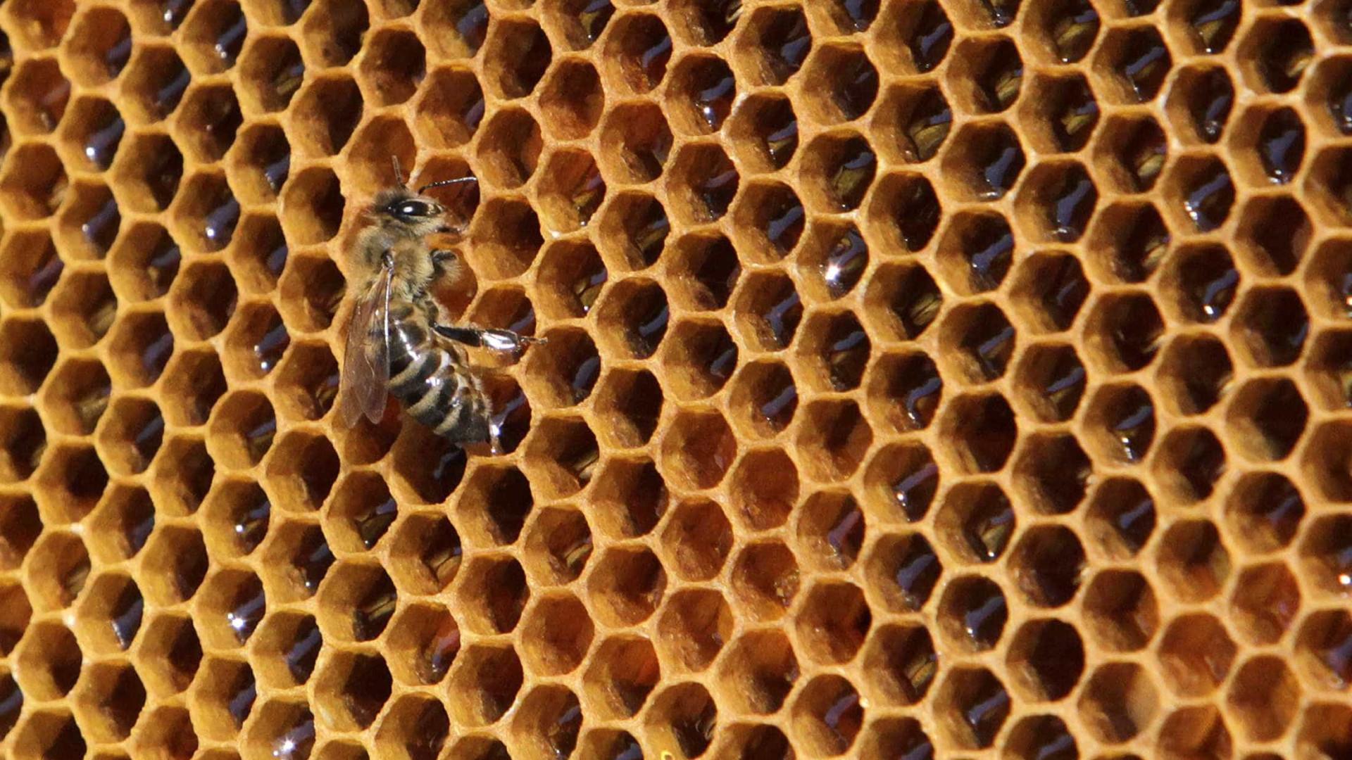 Feira promove mel que sofreu quebras na produção em Vila Pouca de Aguiar