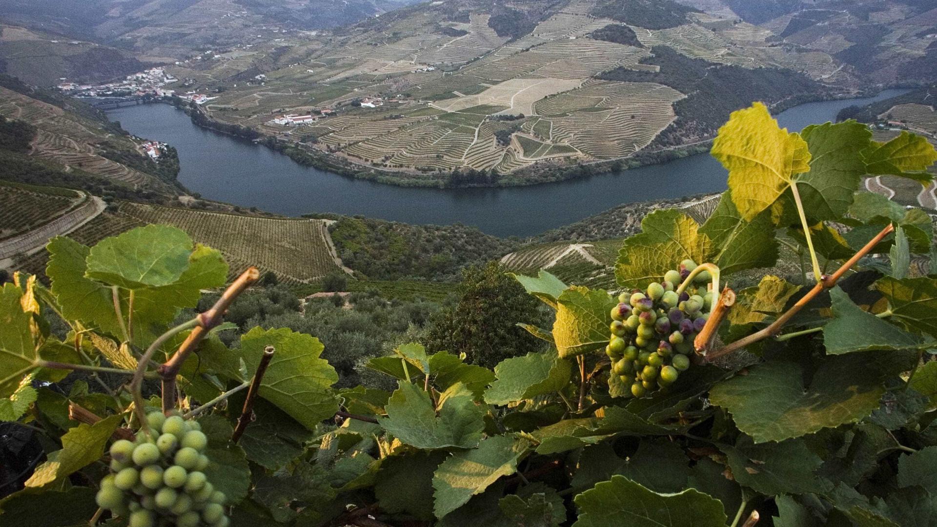 Para pagar dívida a empregados, Casa do Douro vende litros de vinho