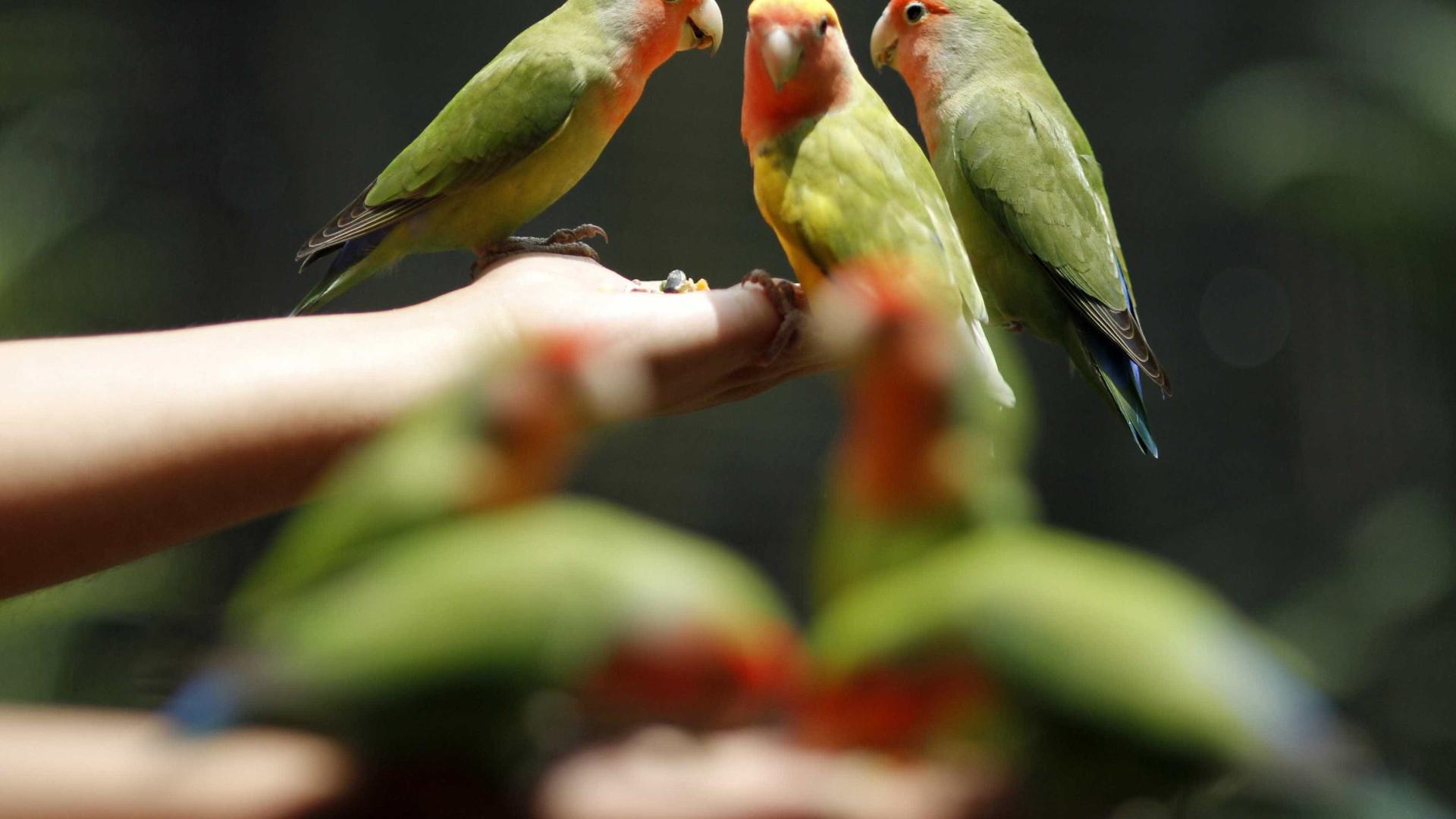 Sabia que as aves de canto estão em risco? Evite uma Floresta Silenciosa