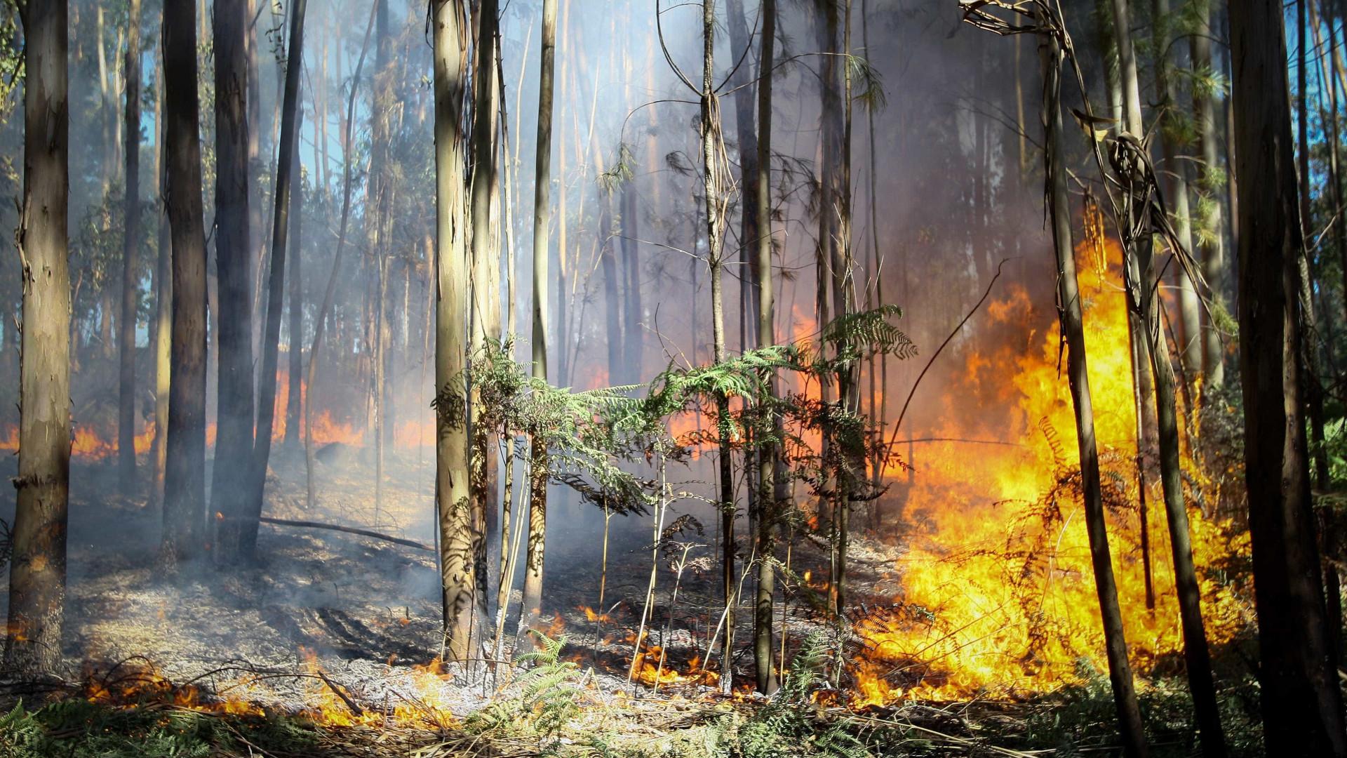 Dezoito concelhos do continente em risco máximo de incêndio
