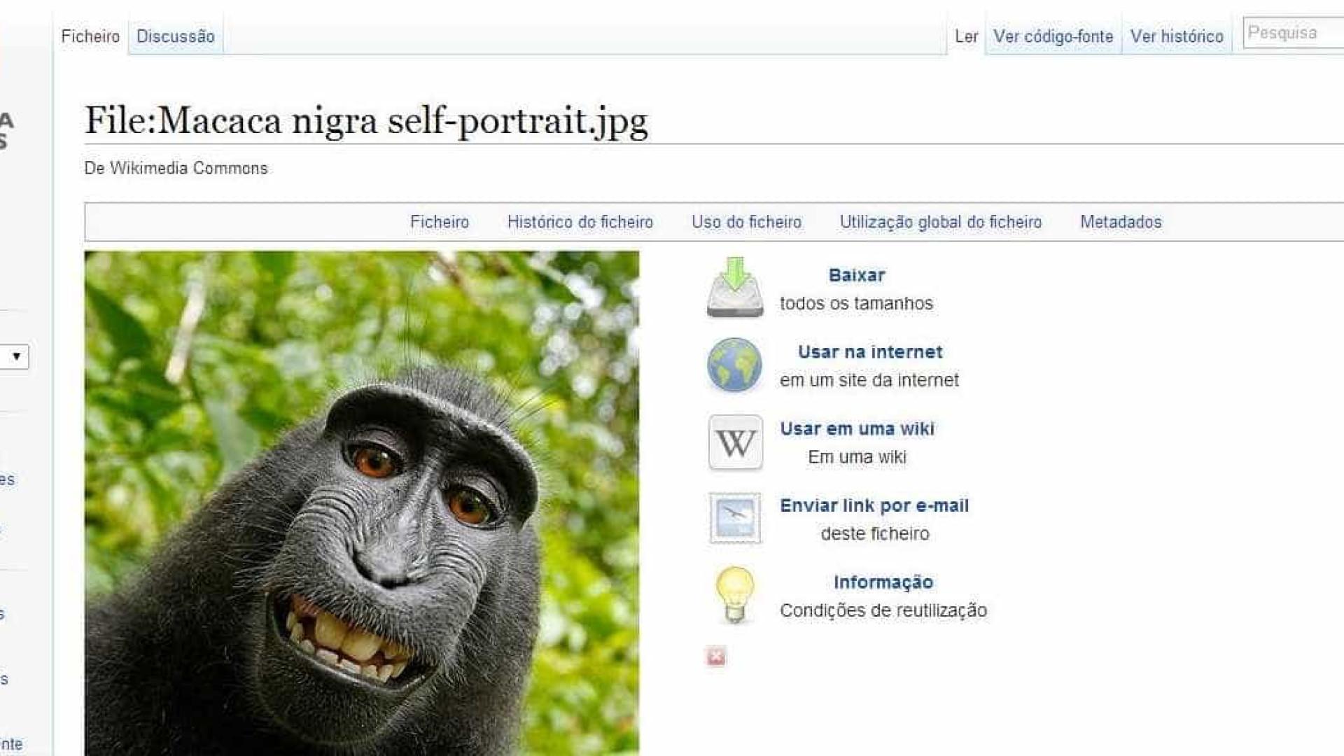 Macaco que tirou selfie vai receber 25% de receitas