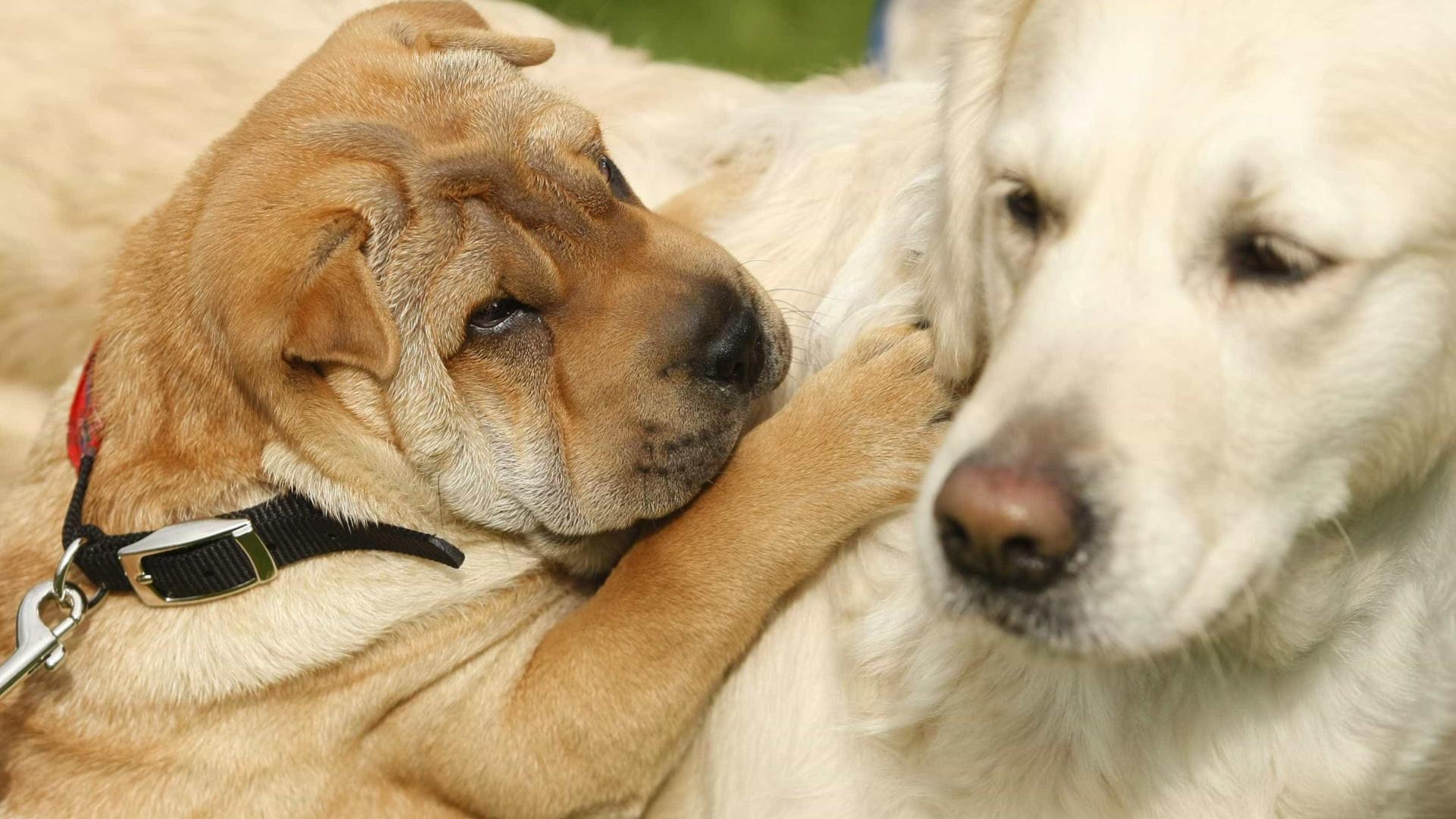 Liga dos Animais defende revisão do novo estatuto jurídico dos animais