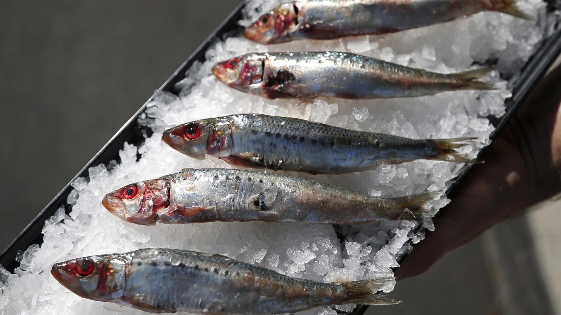 A partir de amanhã só se pode pescar sardinha até 150 quilos por dia